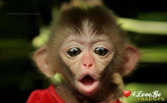 მაიმუნის წელში დაბადებული ადამიანის 5 მომხიბლავი თვისება