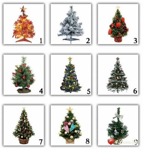 აირჩიე საახალწლო ნაძვის ხე
