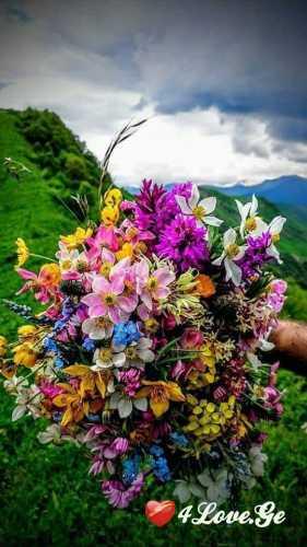 სიცოცხლე(ყვავილები)
