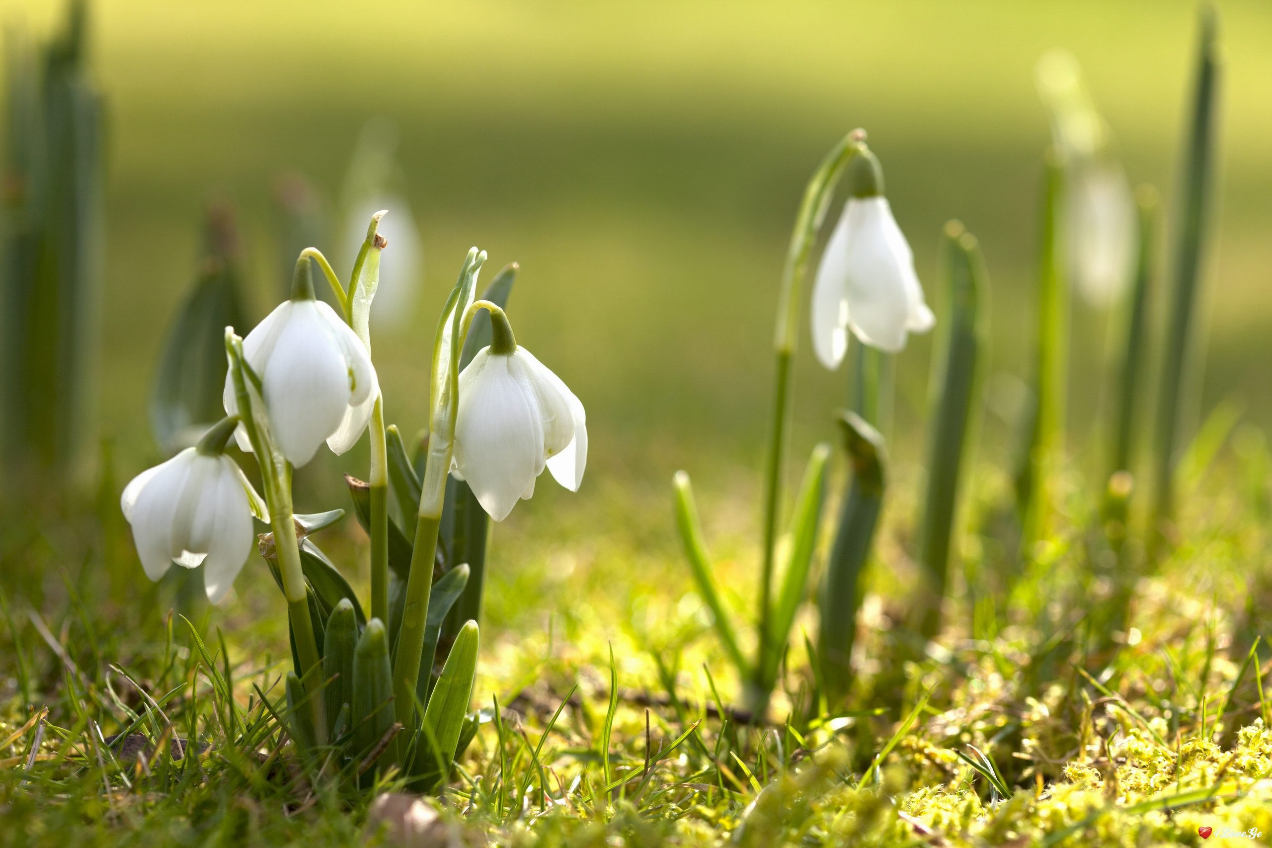 გაზაფხული მოვიდა!  (უ-შენ-ჩემ-ოობაში...)