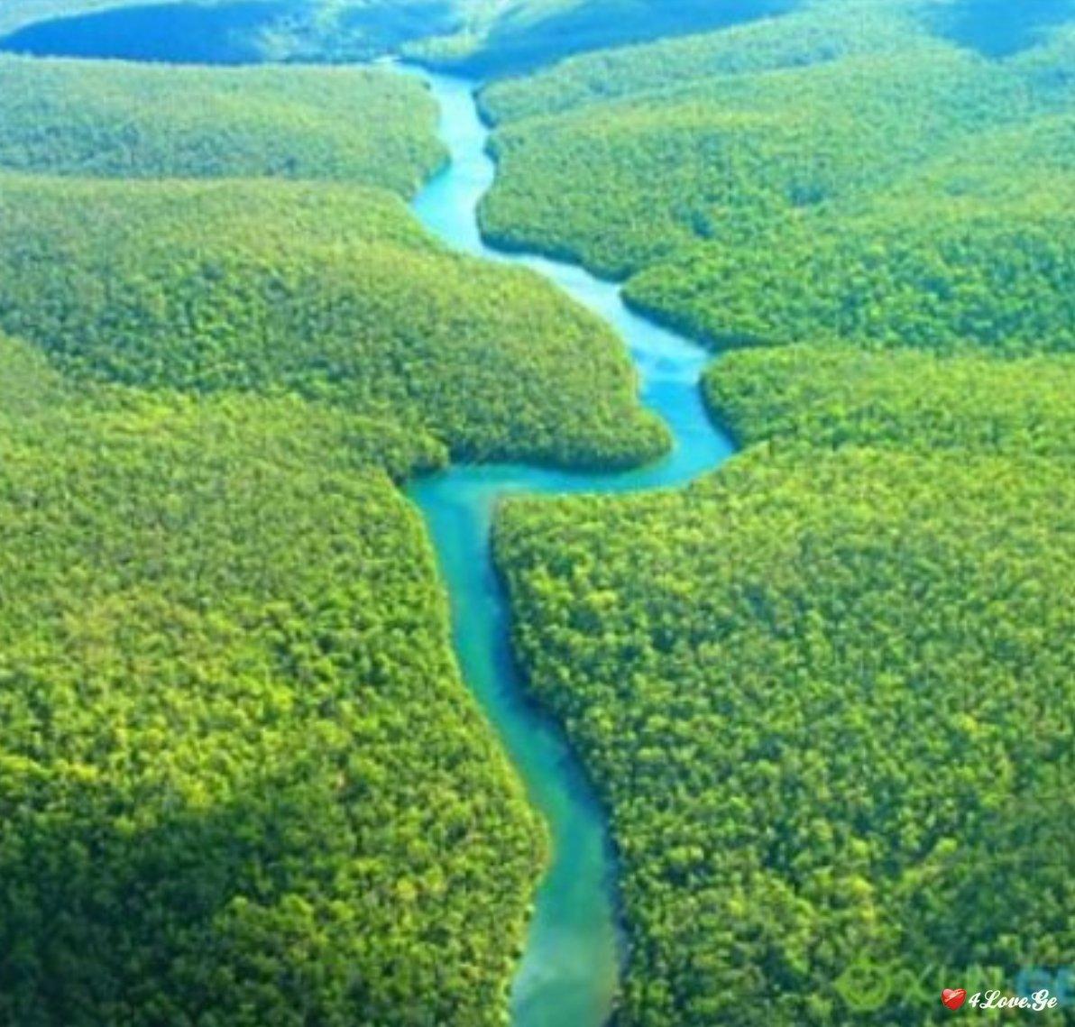 მდინარეში ასახული ცხოვრება