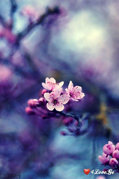dandelions (5)